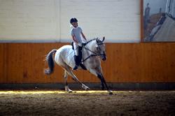 eigenes pferd oder reitbeteiligung